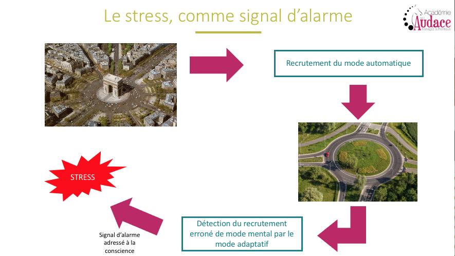 Académie de l'Audace - l'intelligence du stress